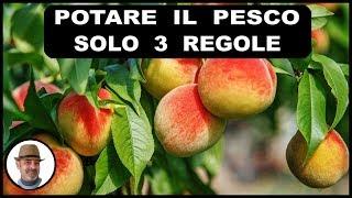 Download lagu POTARE IL PESCO, 3 semplici regole