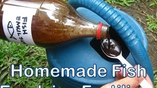 Homemade Fish Emulsion as Organic Fertlizer