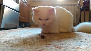 Кошка Белка и майский жук