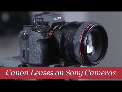 Before You Use Canon Lenses on a Sony Camera...