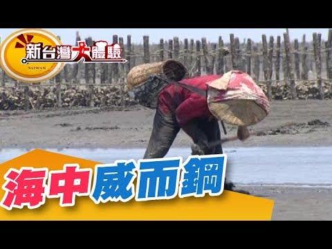 海中威而鋼 泥地黃金爭奪戰《新台灣大體驗》第210集