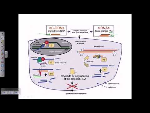 Non viral gene delivery system