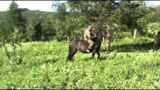 Школа выживания  Спосбы передвижения в экстремальных ситуациях  Лошадь