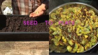 SQUASH - FROM SEED to PLATE
