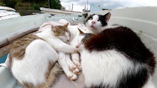 船の上で爆睡していた猫達、カメラに気付くとビックリして飛び起きた
