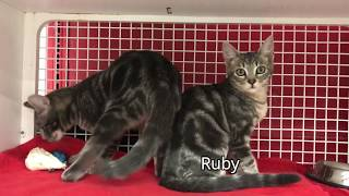 Super Cute Kittens for Adoption