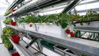 Промышленная теплица Фермер от компании Воля(, 2015-02-05T09:01:20.000Z)