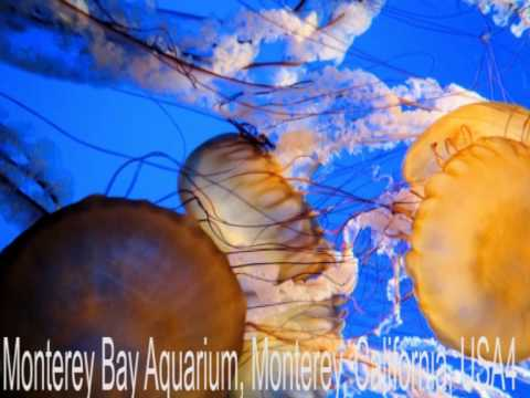 Beautiful life of jelly fish in the sea