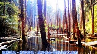 忘憂森林、銀杏森林 休閒二日遊.........(南投杉林溪)