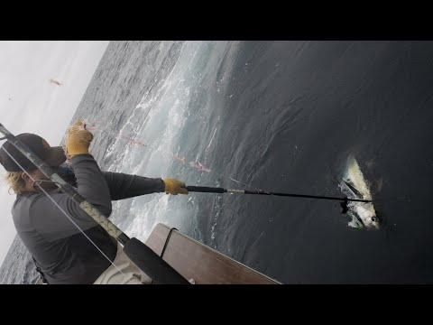 Catching Giant Bluefin And Yellowfin Tuna On The East Coast