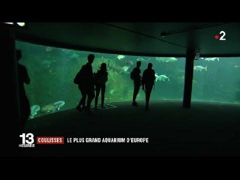Boulogne-sur-Mer : le plus grand aquarium d'Europe / JT du vendredi 20 avril 2018