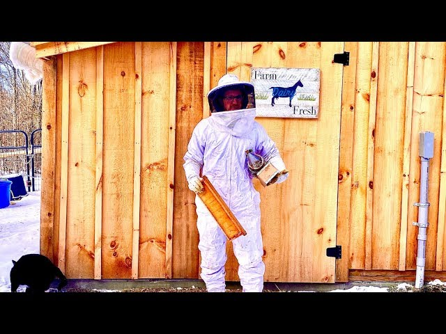 We Bought 20,000 Rare Bees OFF the Internet For OUR HOMESTEAD