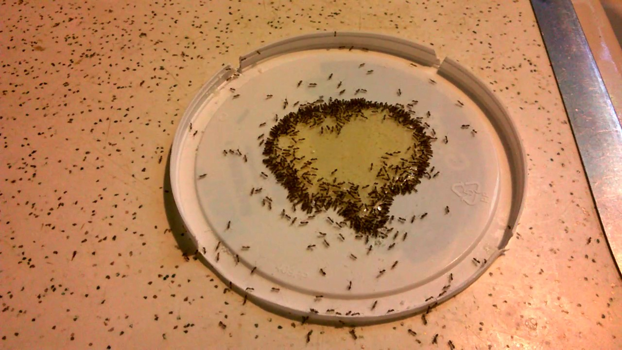Best Way To Kill Ants On Kitchen Counter