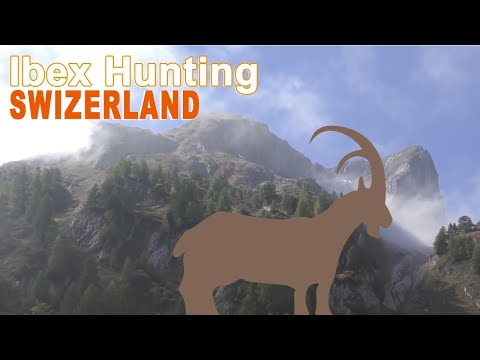 Alpine Ibex Hunting  N°2 in Swizerland .   2015 - 2016 With Ovini Expéditions