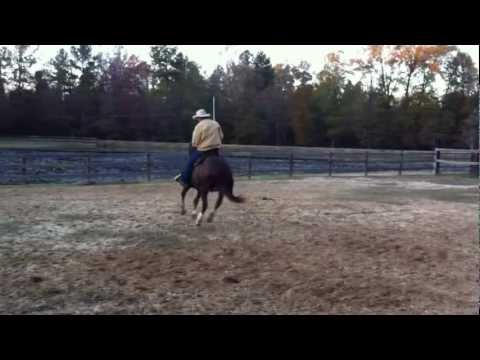 Chip Land Performance Horses Futurity Prospect Grandson of Boonlight Dancer For Sale - Part 2