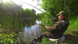ЗАБРОСИЛ ПОПЛАВОК В ЛЕСНОЙ ЗАТОПЛЕННЫЙ ОВРАГ Рыбалка на карася в мае