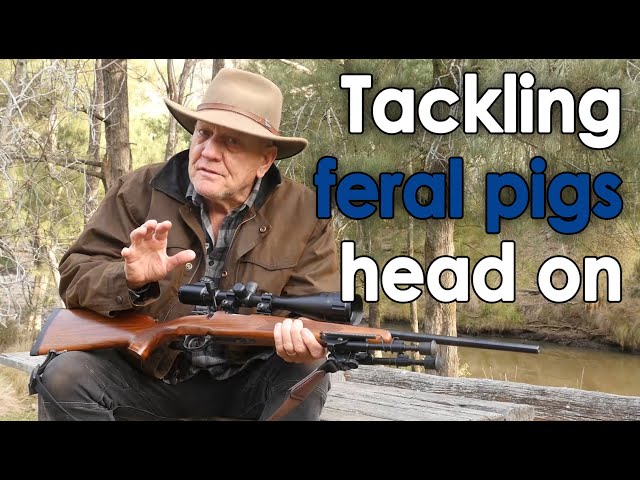 Tackling the feral pig problem head on