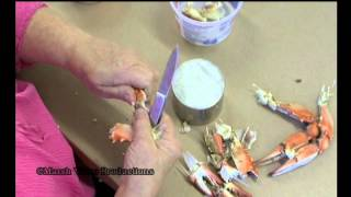 How To Pick A Blue Crab /eastern Shore Of Maryland Video