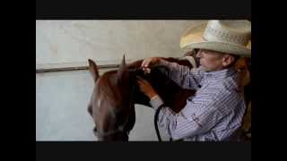 How to Properly Tie a Rope Halter