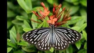 İspanyol Meyhanesi'ne konan Tayland Kelebekleri
