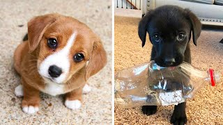 Cute baby animals Videos Compilation cutest moment of the animals  Cutest Puppies #2