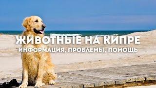 """Животные на Кипре. Программа """"Объектив"""""""