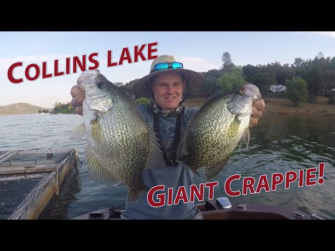 I CAUGHT A BIG ONE! ~Collins Lake Summer 2018 Fishing Report~