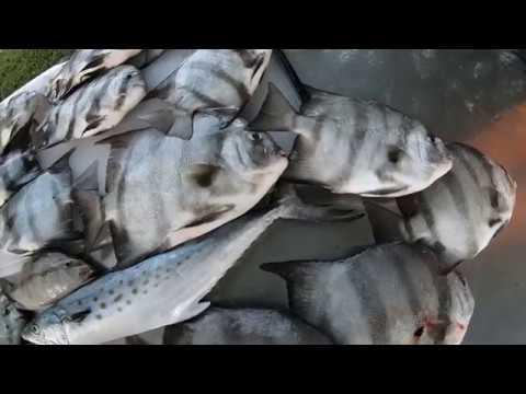 Chesapeake Bay Bridge Tunnel Fishing September 21st, 2018