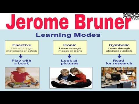 Bruner's Cognitive development theory