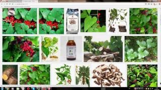 видео Адамов корень (тамус обыкновенный): применение в народной медицине, рецепты
