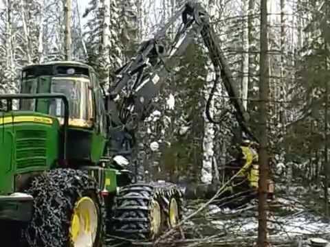 фото валят лес