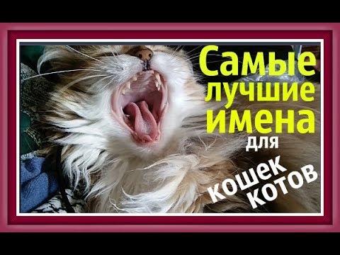 ИМЕНА ДЛЯ КОШЕК КОТОВ names for cats Как назвать котенка кошку кота КЛИЧКИ ДЛЯ КОТОВ КОШЕК@Хомки