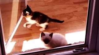 Котята в добрые руки Волжский