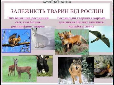 Природні зони України.Природознавство.4 клас.