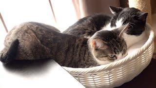 猫の添い寝のつもり