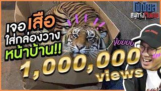 เจอเสือใส่กล่องวางหน้าบ้าน!! : โซเชียลสนุกจังโว้ย!! | VRZO