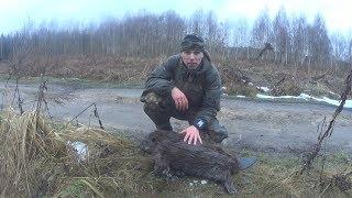 Охота на бобра капканом зимой. Тактический ремень для охотника!