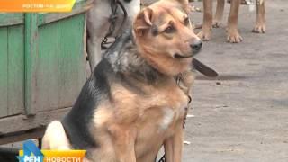 Отлов собак со смертельным исходом