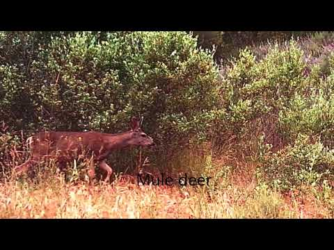 Coyote Creek Wildlife