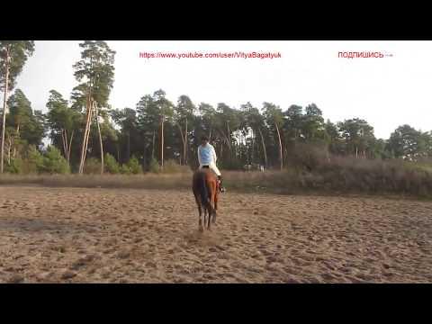 Красивая всадница упала с лошади