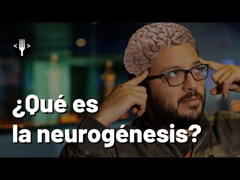 ¿Las neuronas se pueden regenerar?
