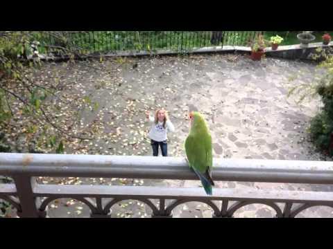 Lovebird flying outdoor