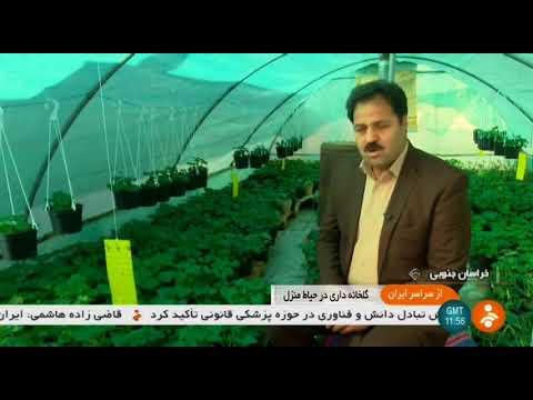 Iran Chahkand village, Birjand county, Planting trees كاشت درخت روستاي چاه كند بيرجند ايران