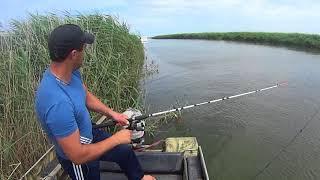 Окунь в Темрюкских лиманах на куски рыбы