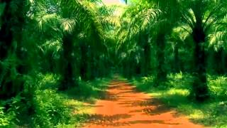 The Cure - A Forest ( extended version )