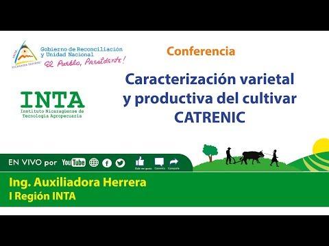 #INTA Caracterización varietal y productiva del cultivar CATRENIC