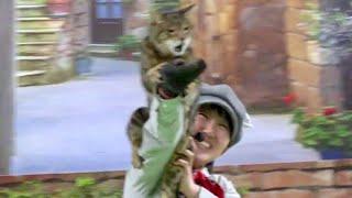 動物園初!猫本来の能力を披露するネコによるショー「ザ・キャッツ」(その2) お誕生日サービスを使って那須どうぶつ王国へ行って来ました~♪ 00103