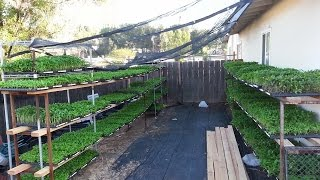 My New Baby Plants To Sell 2015 Part 1
