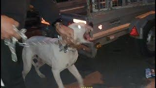 هجوم-كلب-الدوجو-الارجنتيني-على-اصاحبه-السبب-مع-جمال-العمواسي