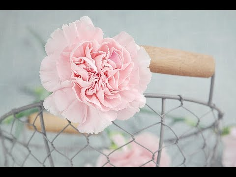 How to make a beautiful and amazing carnation flower with crepe paper.